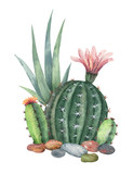 Watercolor vector collection of cacti and succulents plants isolated on white background. - 193980670