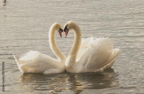 Aluminium Zwaan Swan Love in at Park
