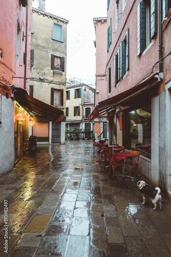 Fotobehang Smalle straatjes Cute fluffy dog, pug walking in Venice, windy weather, traveling