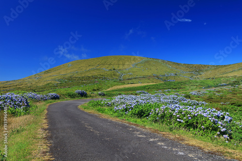 fototapeta na ścianę Road on Sao Miguel Island of Azores, Portugal, Europe