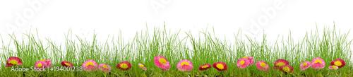Gras mit Daisys - 194001238