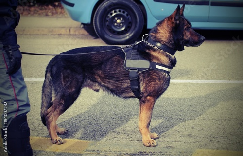 Fotobehang Palermo police dog during surveillance with vintage effect