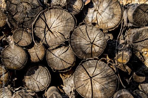 Foto op Canvas Brandhout textuur Troncos