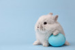 Leinwanddruck Bild - Easter bunny rabbit with blue painted egg on blue background. Easter holiday concept.