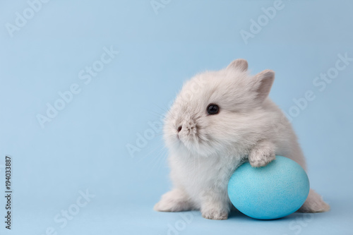 Leinwandbild Motiv Easter bunny rabbit with blue painted egg on blue background. Easter holiday concept.