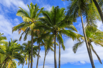 Palm background from Hawaii