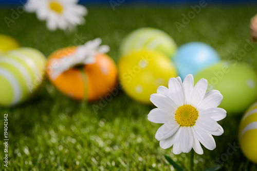 close up of a springtime daisy flowers with colorful painted easter eggs on green grass