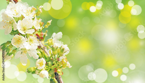Foto op Canvas Natuur Der Frühling ist da!