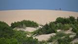 jockeys ridge state park, largest sand dune on east coast of USA - 194051200