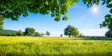Grüne Wiese mit Obstbäumen bei Sonnenschein - 194053284