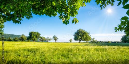 Poster Grüne Wiese mit Obstbäumen bei Sonnenschein