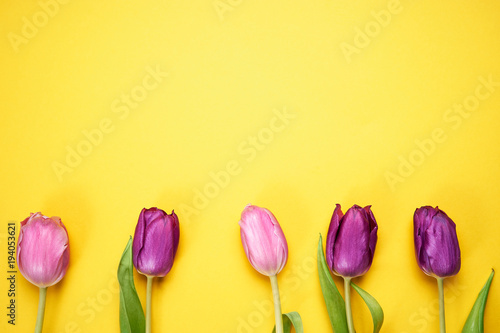 Top view of purple tulips on yellow background