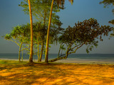 the tree close the beach in the night - 194068404