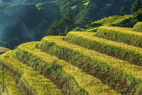 Fotobehang Honing Terraced rice field in harvest season at sunset in Mu Cang Chai, Vietnam.