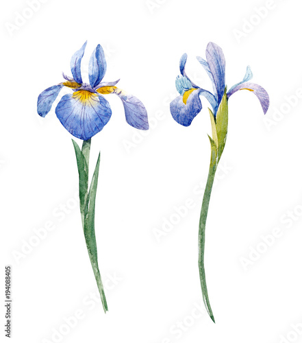 Watercolor iris set - 194088405