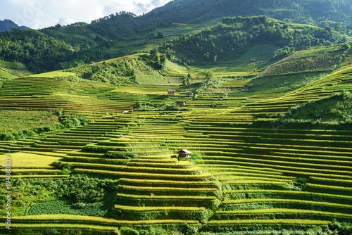 Fotobehang Pistache Terraced rice field in harvest season in Mu Cang Chai, Vietnam.