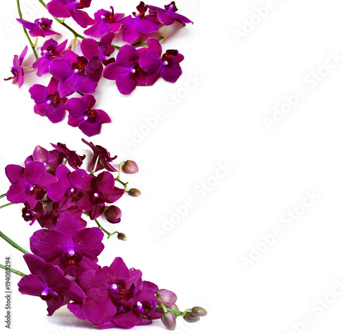 Purple Orchid flowers isolated on white background