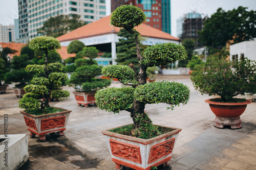 close-up view of green decorative trees in pots on street in Ho Chi Minh, Vietnam