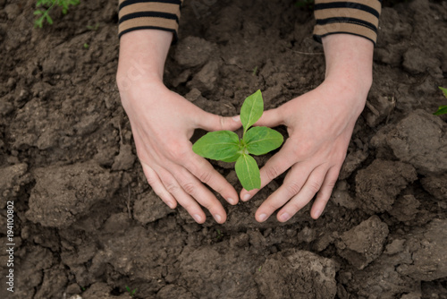 Foto op Canvas Natuur little sprout and female hands holds green leaves