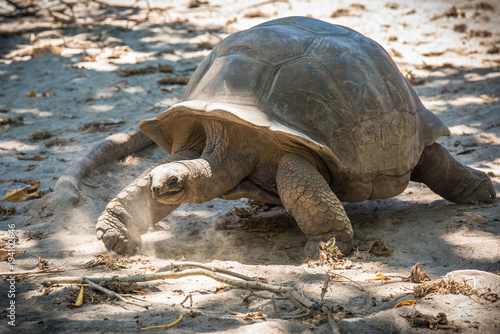 Fotobehang Schildpad Seychelles giant tortoise