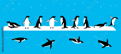 Wall mural Adelie Penguin standing on the ground, slipping on the ice, swimming on the sea