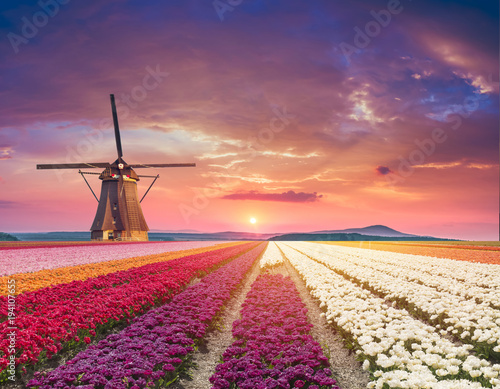 Fotobehang Koraal traditional Netherlands Holland dutch scenery with one typical windmill and tulips, Netherlands countryside
