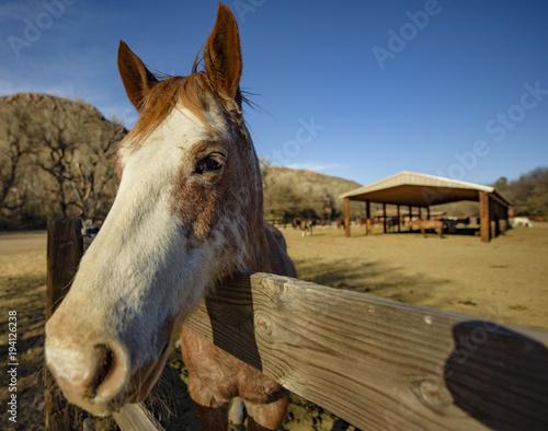 Fotobehang Arizona Friendly Horse