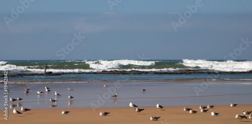 Panoramiczny widok plaży, spienionego oceanu, fala z białą pianą załamuje się, na mokrym piasku stoją mewy