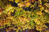 Haya con hojas doradas en otoño desde arriba / golden leaves beech from above in autumn - 194136820