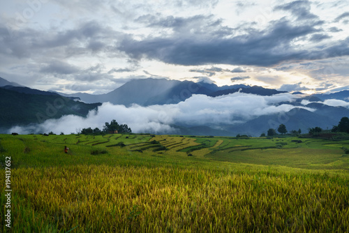 Aluminium Bleke violet Terraced rice field landscape in harvesting season with low clouds in Y Ty, Bat Xat district, Lao Cai, north Vietnam