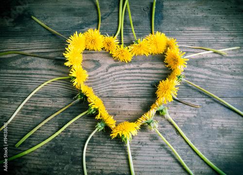 Fototapeta dandelions in the heart shape on dark background