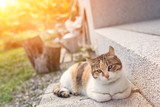 young little cat - 194149810