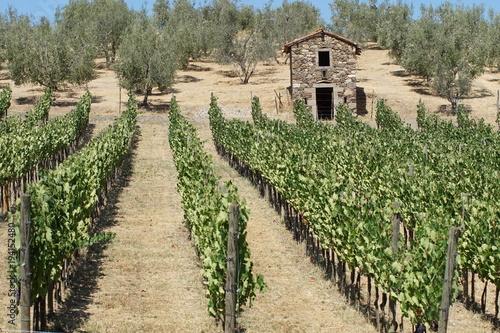 Fotobehang Wijngaard Toskana Italien