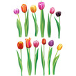 Realistic multicolor tulips set