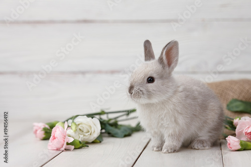 Leinwandbild Motiv Easter bunny rabbit with spring flowers on white wooden planks, Easter holiday concept.