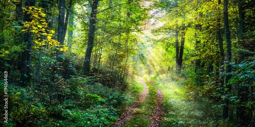 Staande foto Weg in bos Wanderweg im Frühling führt zu einer grünen Waldlichtung im Wald