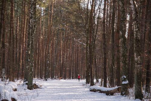 Staande foto Weg in bos Leśna droga zasypana świeżym śniegiem z biegnącą w dali młodą kobietą