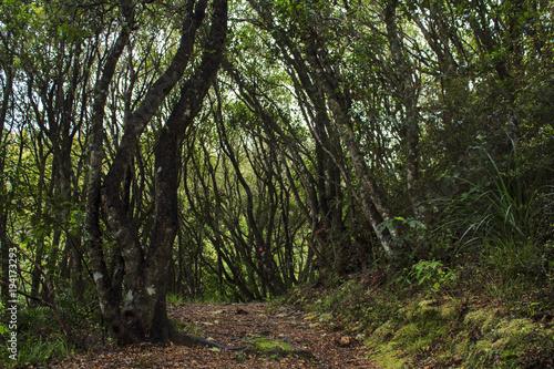 Fotobehang Betoverde Bos Walkway in tropical New Zealand forest