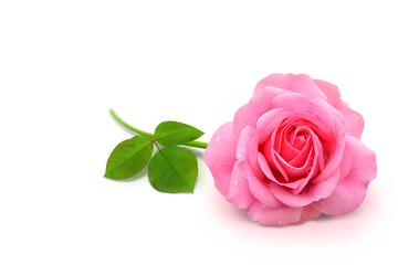 Blumen 909