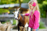 Cute little girl petting and feeding a goat at petting zoo. Child playing with a farm animal on sunny summer day. - 194182270