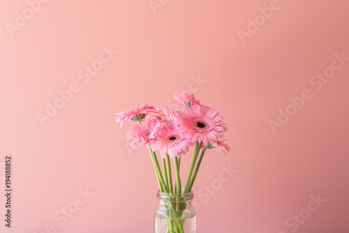 Pink gerbera daisies in glass jar against pink background