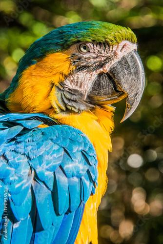 Aluminium Papegaai Macaw Looking Proud