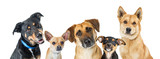 Various Dogs Horizontal Web Banner