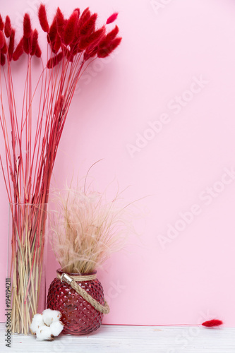 Fototapeta red spikelets in a vase, cotton - decor on a pink background