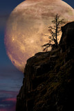Supermoon with lone tree on cliff edge - 194211805