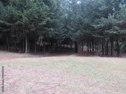Tuinposter Weg in bos Forest