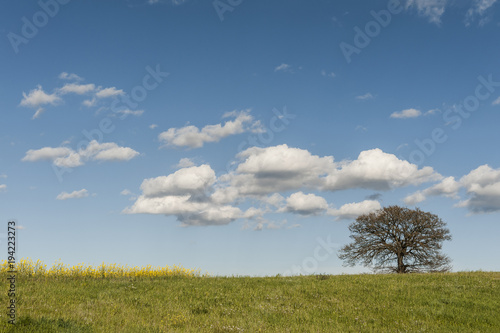 Solitary tree on the pastures