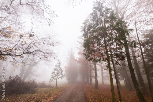 Staande foto Cappuccino Beautiful scenery in the forest with fog and mist and autumn foliage