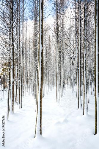 Plexiglas Berkenbos Russian winter