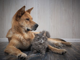 Friendship dogs and cats - 194235007